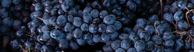 Souscription Bordeaux 2020