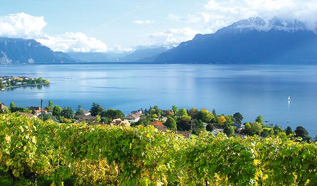Weinberge am Genfersee